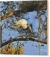 Wood Stork Perch Wood Print