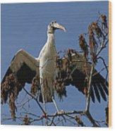Wood Stork Preparing To Fly Wood Print