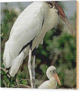 Wood Stork With Nestling Wood Print