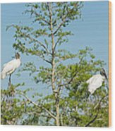 Wood Storks In The Everglades Wood Print