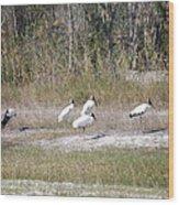 Wood Storks Wood Print