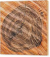 Wood Surface With Annual Rings Wood Print
