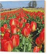 Woodburn Tulip Fields Wood Print