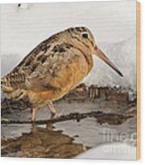 Woodcock In Winter Wood Print