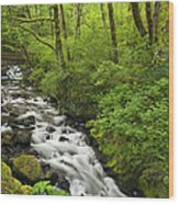 Wooded Stream In The Spring Wood Print by Andrew Soundarajan