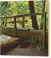 Wooden Bridge In The Hoh Rainforest Wood Print