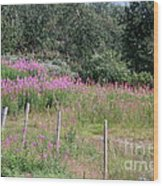 Wooden Fence And Pink Fireweed In Norway Wood Print