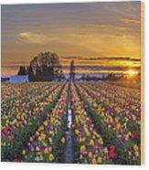 Wooden Shoe Tulip Festival Sunset Wood Print