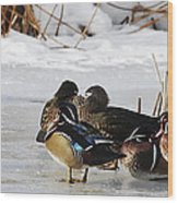 Woodies On Ice Wood Print