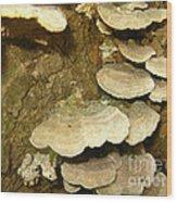 Woodland 4 Wood Print