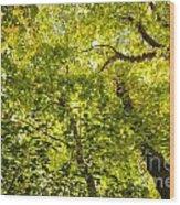 Woodland Background 02 Wood Print