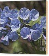 Woodland Blue Wood Print