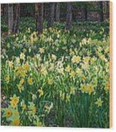 Woodland Daffodils Wood Print by Bill Wakeley
