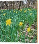 Woodland Daffodils Wood Print