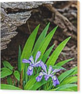 Woodland Dwarf Iris Wildflowers Wood Print