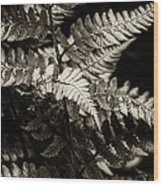 Woodland Fern Wood Print