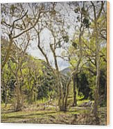 Woodland Glen In The California Vallecito Mountains Wood Print