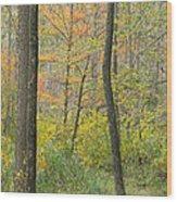 Woodland Interior Wood Print