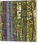 Woodland Morning Wood Print