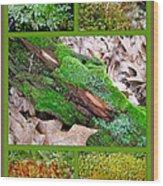 Woodland Mosses Wood Print