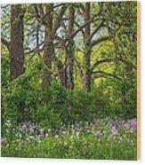 Woodland Phlox 2 Wood Print