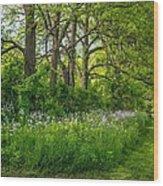 Woodland Phlox   Wood Print