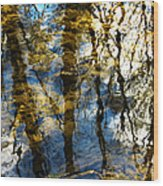 Woodland Reflections Wood Print by Shawna Rowe