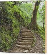 Woodland Stairs Wood Print