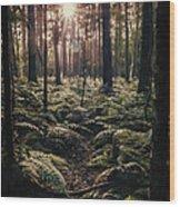 Woodland Trees Wood Print