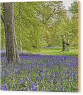 Woodland Walk In Blue Wood Print