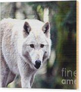 Woodland White Wolf 2 Wood Print