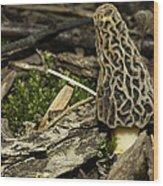 Woodland Yummy Wood Print