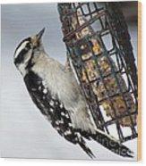 Woodpecker At Suet Iv Wood Print