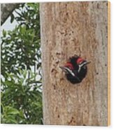 Woodpecker Babies Ready To Explore Wood Print