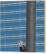 Woodpecker Column Wood Print
