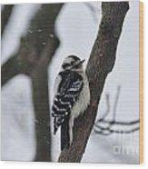 Woodpecker In Winter Wood Print