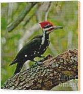 Woodpecker On A Limb Wood Print