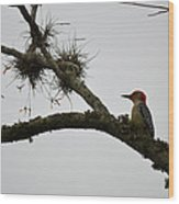 Woodpecker On Lookout Wood Print