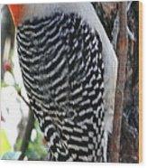 Woodpecker Profile Ll Wood Print