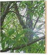 Woodpecker Tree Art Wood Print