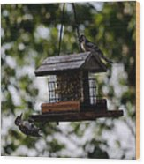 Woodpeckers At Dinner Wood Print