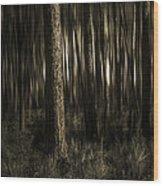 Woods Wood Print by Mario Celzner