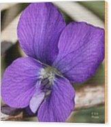 Woody Blue Violet Wood Print