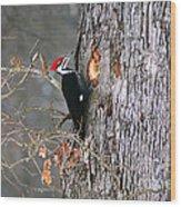 Woody Woodpecker Wood Print