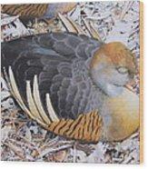 Woody's Duck Wood Print