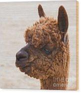 Woolly Alpaca Wood Print