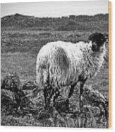 Wooly Goat Wood Print