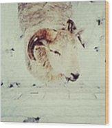 Wooly Sheep In Wales Wood Print