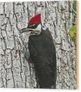 Working Woodpecker Wood Print