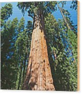 World Famous General Sherman Sequoia Tree In Sequoia National Park. Wood Print